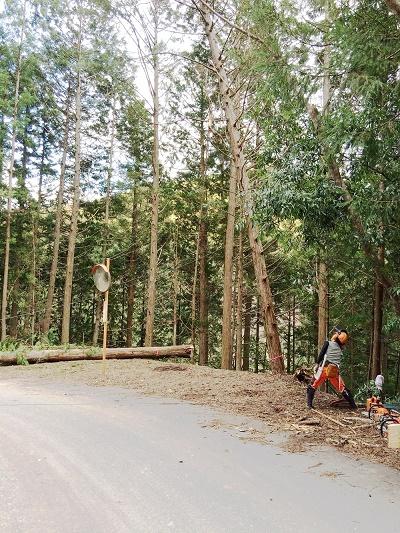 桧の伐採 東栄町