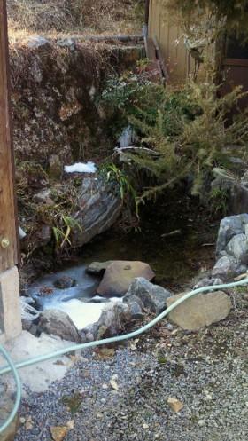 実家の庭の池