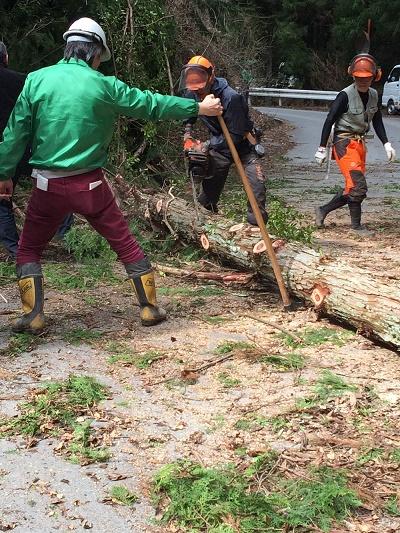 伐採枝払い 桧 東栄町