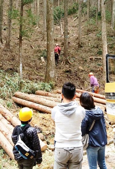 設楽の山の木の伐採 豊川市一宮町