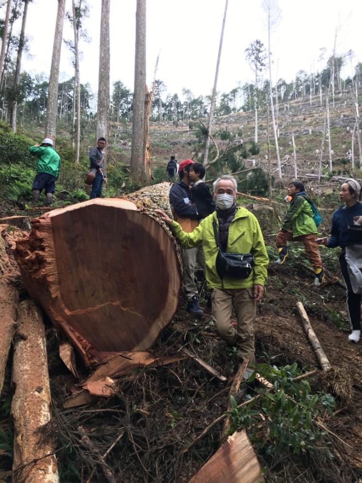 直径1mの杉の木