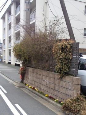 道路沿いの花壇
