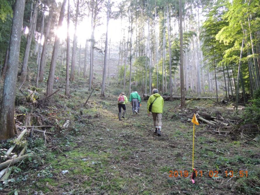 伐採現場 奥三河の木